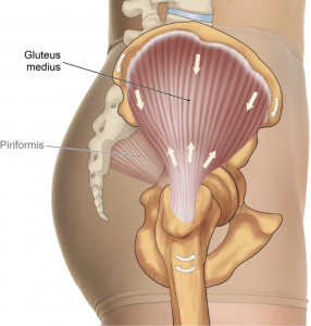 Gluteal Tendons